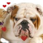 Animal Welfare League of Queen Anne's County